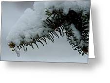 Spruce Needles And Ice Greeting Card