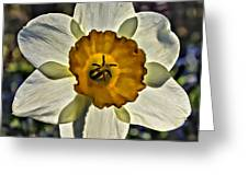 Square Daffydowndilly Greeting Card