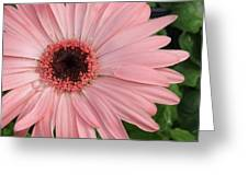 Square Framed Pink Daisy Greeting Card