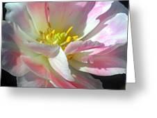 Square Tulip Greeting Card
