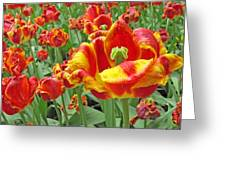 Square Yellow And Red Tulips Greeting Card