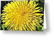 Square Yellow Dandelion Greeting Card