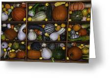 Squash And Gourds In Compartments Greeting Card