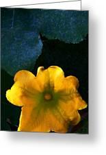 Squash Blossom Greeting Card