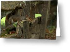 Squatting Squirrel Greeting Card