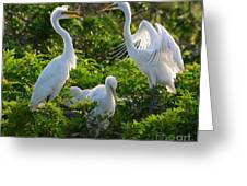 Squawk Of The Great Egret Greeting Card
