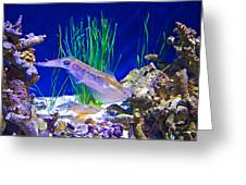 Squid In Monterey Aquarium-california Greeting Card