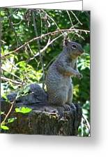 Squirel Greeting Card