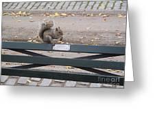 Squirl Nut Salad Greeting Card