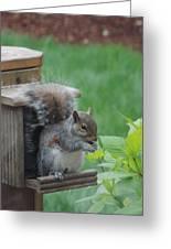 Squirrel 2 Greeting Card