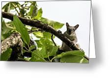 Squirrel 3 Greeting Card