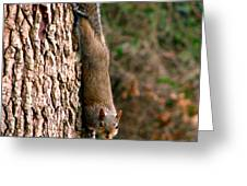 Squirrel 6 Greeting Card