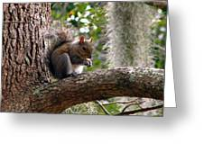 Squirrel 7 Greeting Card