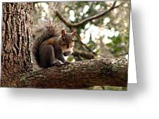 Squirrel 8 Greeting Card