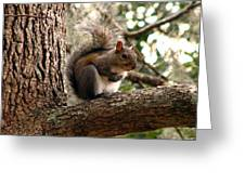 Squirrel 9 Greeting Card
