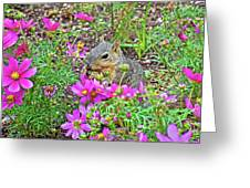 Squirrel Among Coreopsis In Huntington Gardens In San Marino-california   Greeting Card