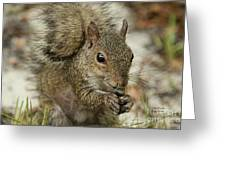 Squirrel And Nuts Greeting Card