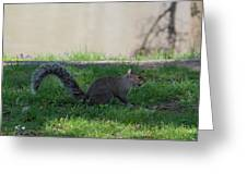 Squirrel At A Stand Still Greeting Card