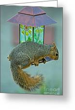 Squirrel At The Bird Feeder Greeting Card