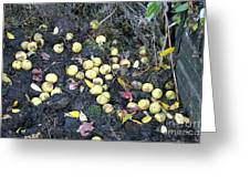 Squirrel Cache In Compost Pile Greeting Card
