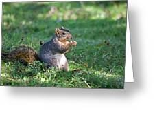 Squirrel Eating A Nut - Eugene Oregon Greeting Card