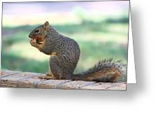 Squirrel Eating Crab Apple Greeting Card