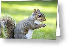 Squirrel Eating Grapes Greeting Card