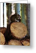 Squirrel Eating Pinecones Greeting Card