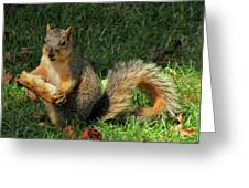 Squirrel Eating Pizza Greeting Card