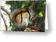 Squirrel Enjoys A Great Meal Greeting Card