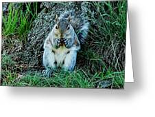 Squirrel Friend Greeting Card