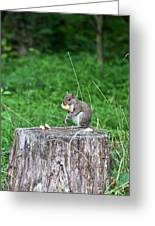 Squirrel Having Lunch Greeting Card