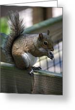 Squirrel II Greeting Card