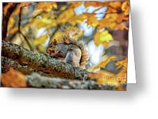 Squirrel In Autumn Greeting Card