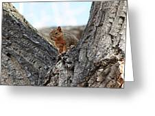 Squirrel In Cottonwood Tree Greeting Card