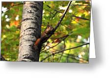 Squirrel In Fall Greeting Card
