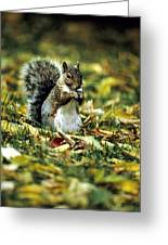 Squirrel In Leaves Greeting Card