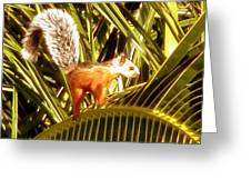 Squirrel In Palm Tree Greeting Card