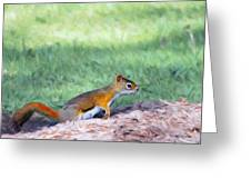 Squirrel In The Park Greeting Card