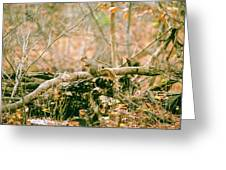 Squirrel In The Woods  Greeting Card