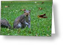 Squirrel Iv Greeting Card