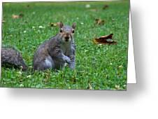 Squirrel Iv Greeting Card