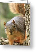 Squirrel Look Greeting Card