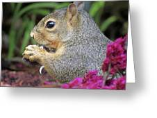 Squirrel - Morning Snack 02 Greeting Card