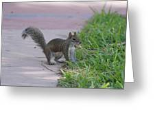 Squirrel Nuts Greeting Card
