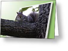 Squirrel On A Limb Greeting Card