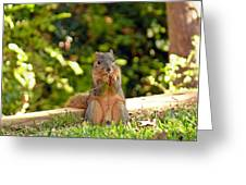 Squirrel On A Log Greeting Card