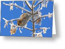 Squirrel On Icy Branches Greeting Card