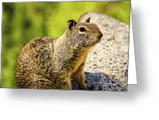 Squirrel On The Rock Greeting Card