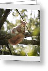 Squirrel On The Spot Greeting Card